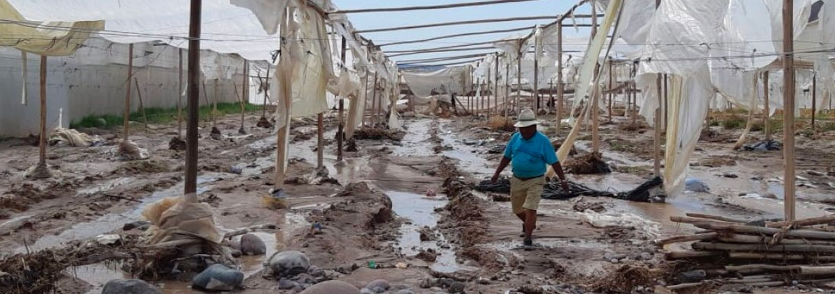 Hombre pasea por las ruinas en Arica tras el desborde.