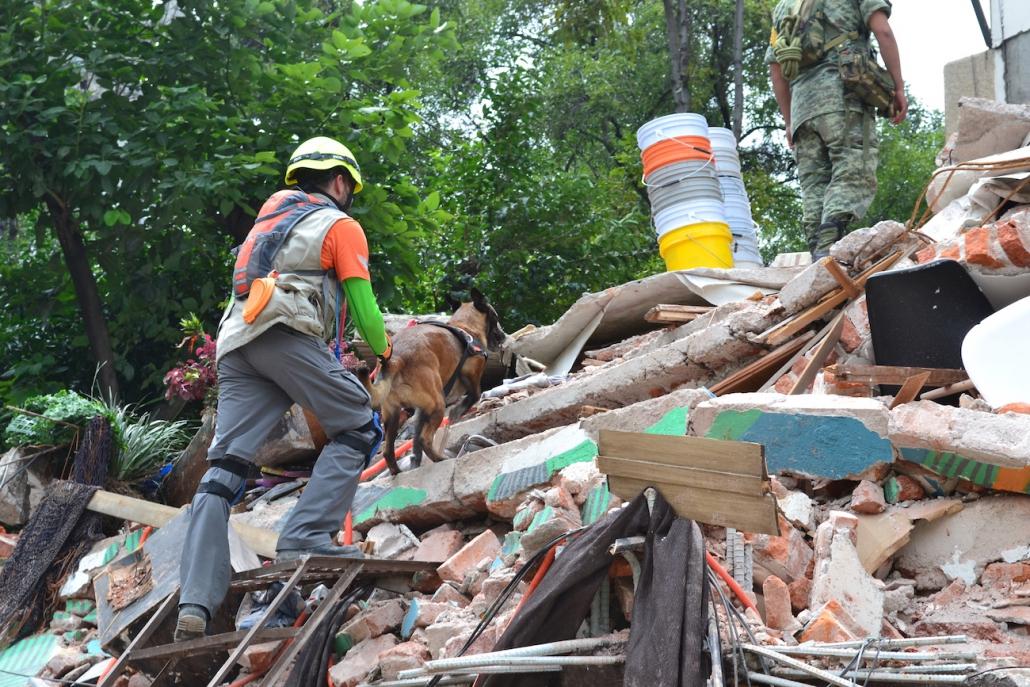 Wolf, uno de nuestros rescatistas, con nuestro perro Enzo buscando vidas en un edificio colapsado.